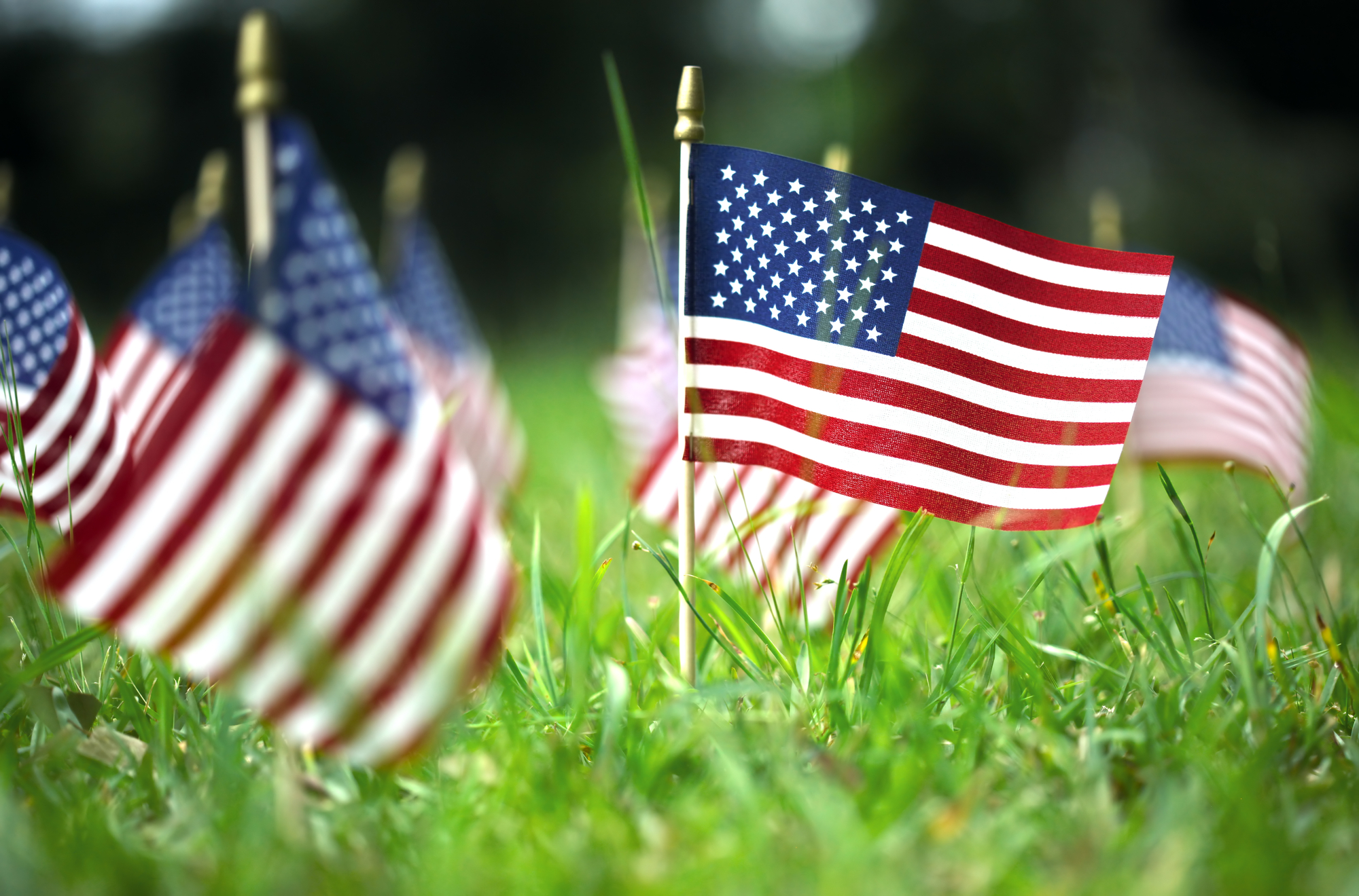 American Flags in Grass